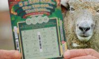 Надежда всяка при билетчетата от лотарията оставете, както би казал Данте днес