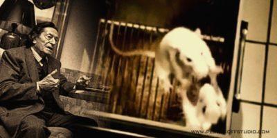 """""""Експеримент на Анри Лабори"""" – за мишките и хората (психология)"""