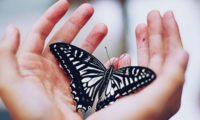 Силата на лекуването чрез притчи (психология)