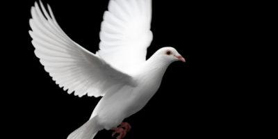 """Бъръс Скинър и """"Суеверието на гълъба"""", което важи и за много хора"""