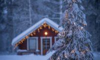 Ден първи. Нова година. И клоните на дърветата ми се струват по-сгушени в зимният си сън