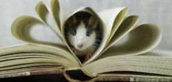 Да се влюбиш в книжен плъх, и колко по-щастлив е живота с четящи хора