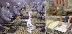 Опасен китайски чесън, който залива всяка година пазара в България