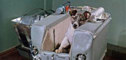 60 години от първият полет на живо същество в Космоса – кучето Лайка