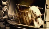 """За мишките и хората – """"Експеримента на Анри Лабори""""  (психология)"""