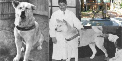 Преди 80 години умира легендарното куче Хачико